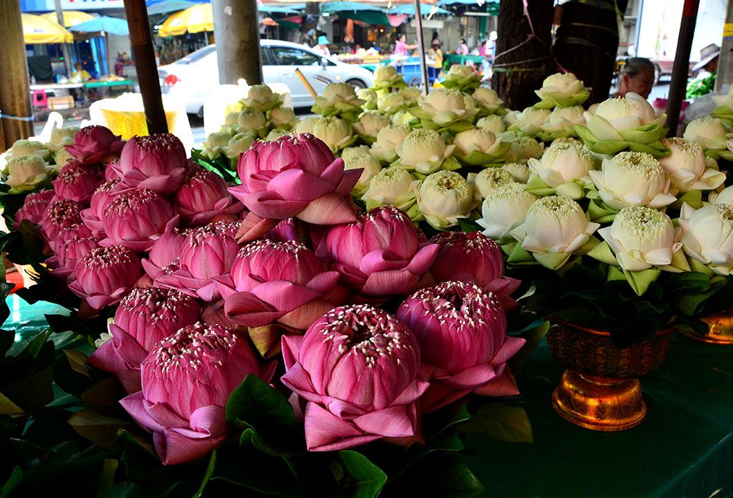 Good Lotus Arrangements Part 25