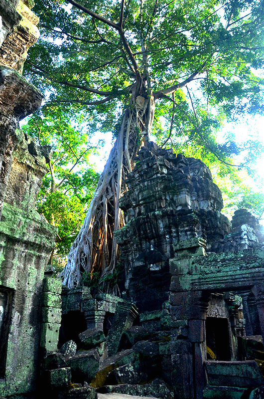 Tree covered temple of Ta Phrom