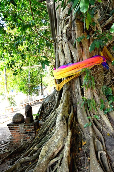 Spirit tree in Wat Bung Kung
