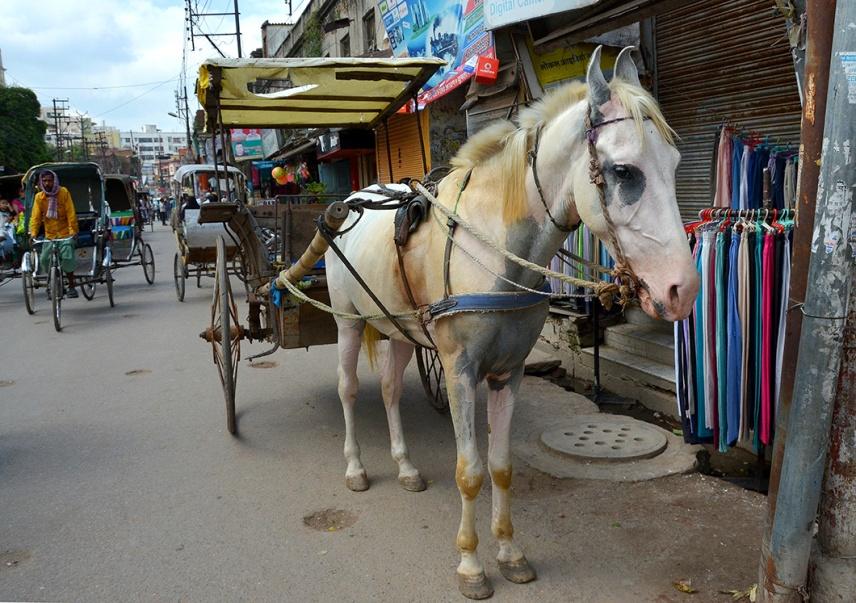 Horse cart - Varanasi, India