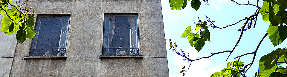 rompe l'oeil windows- Paris