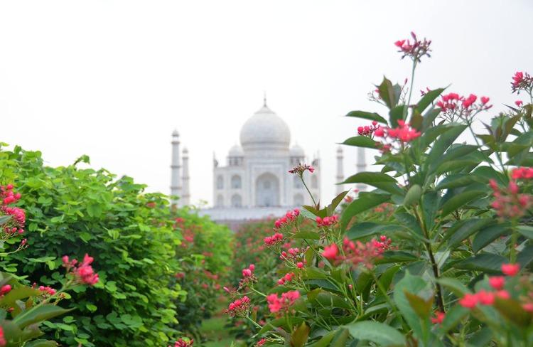 Taj Mahal, - Agra, India