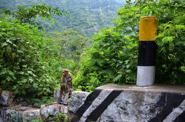Monkeys on highway