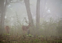 Morning mist- Kabini, India
