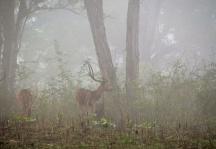 Morning mist- Kabini, India