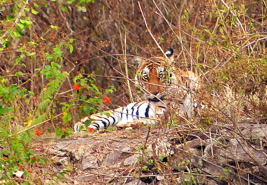 Nagarhole Tiger Reserve - Karnataka, India