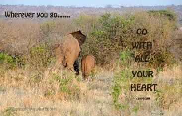 From our safari in Tarangire National Park, Tanzania