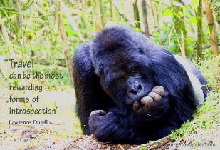 From our close encounter s with the majestic silverbacks of Rwanda