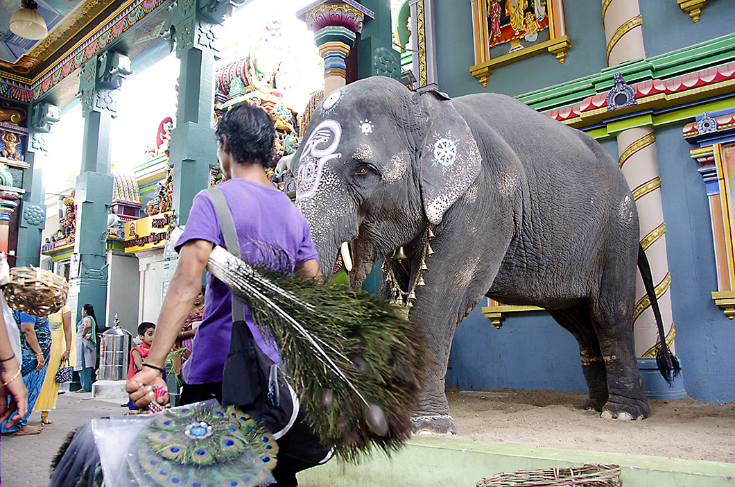 Elephant at the Manakula Vinayagar temple, Pondicherry