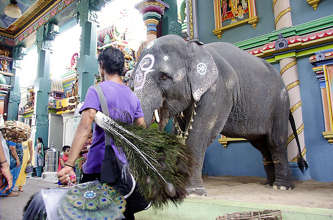 Elephant at the Manakula Vinayagar temple, Pondicherry