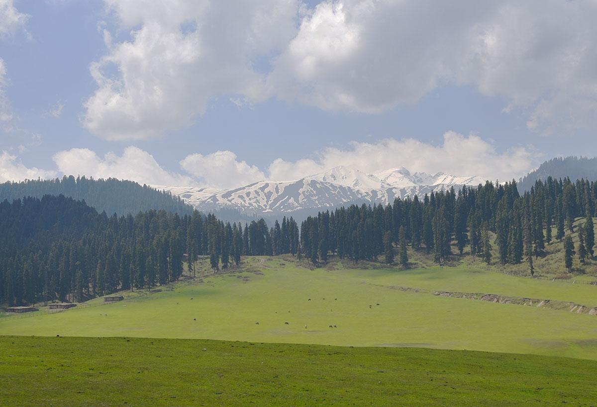 Dodhpathri, Kashmir