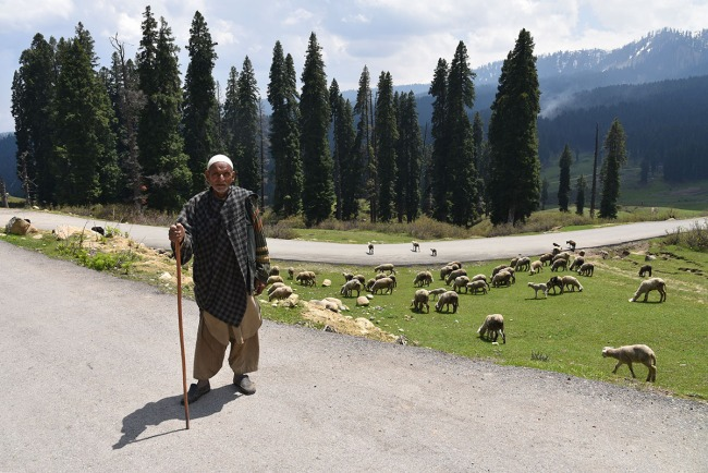 Shepherd, Dodhpatri