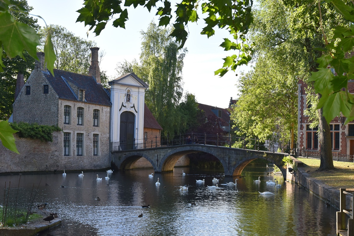 Swans on Minnewater Lake - bruges, belgium