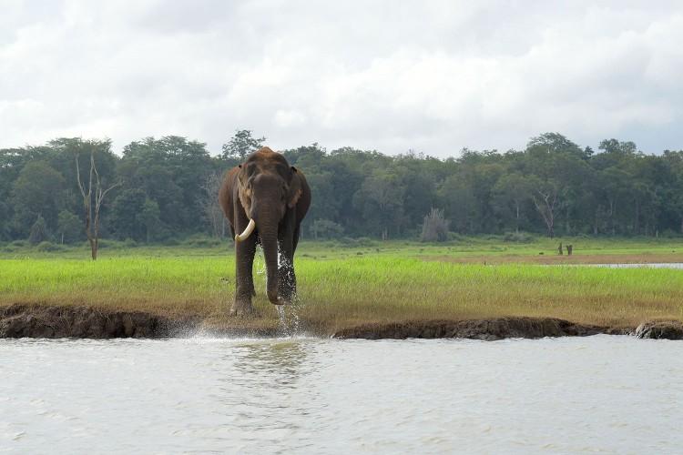 Single tusked elephant in Kabini, India