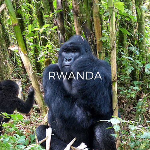 Image Link to Rwanda Guide Page