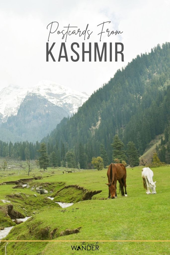 Photo Feature on Kashmir, India showcasing the beauty of its landscapes. #Photography #IndiaTravelDestinations #IndiaTravel #PlacesToVisitInIndia #BeautifulPlaces #Postcards #SayHelloToWanderlust