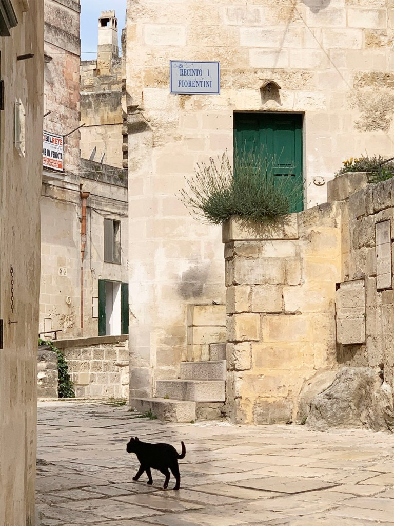 Cat on via Fiorentini in Matera, Italy.