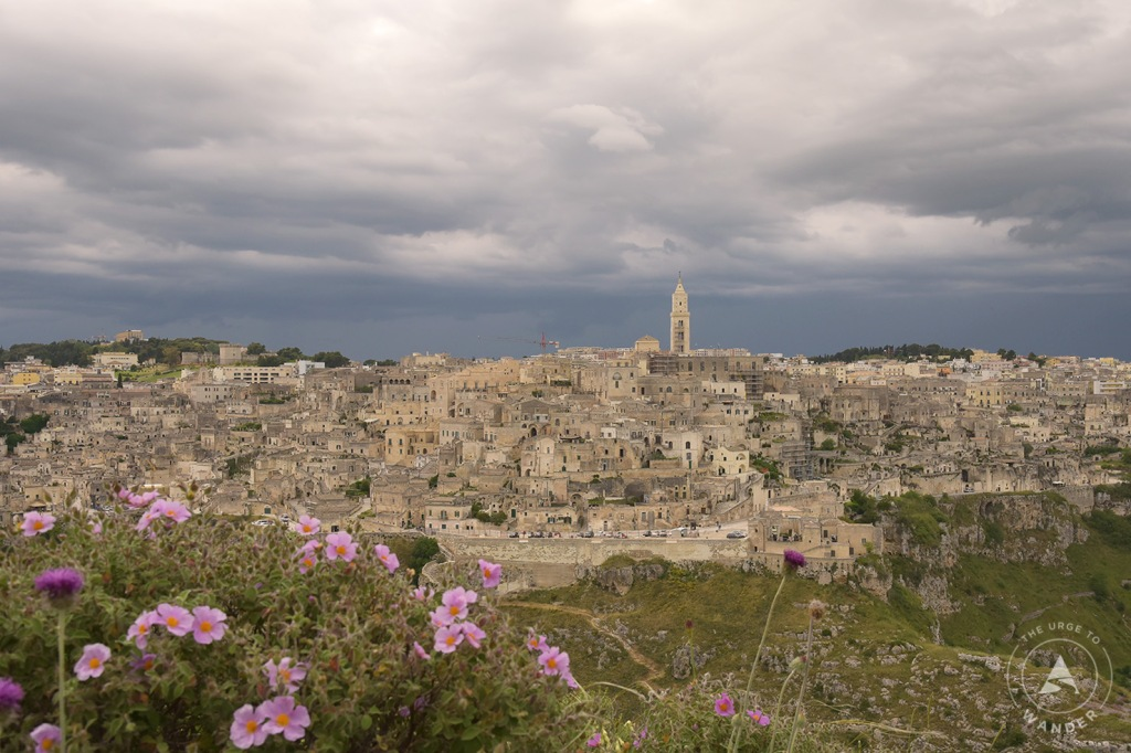 Panoramic view from Murgia Timone with pink wildflowers in the foreground.