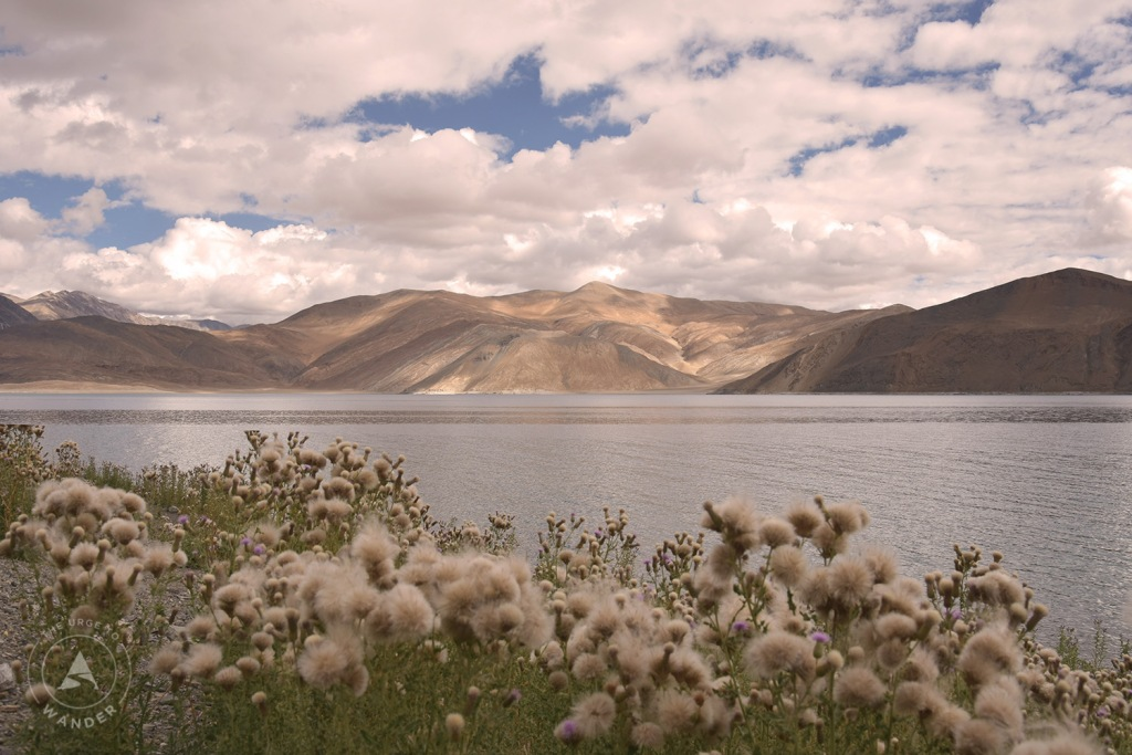 Pangong Lake with pale pink wildflowers In the foreground.